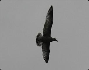 bird freetoedit