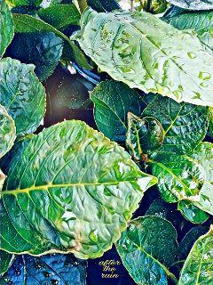 freetoedit outsideplants northphilly wednesdayevening