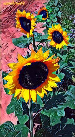 freetoedit mickeybobbieremix sunflowers