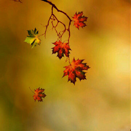 freetoedit wallpaper autumn fall