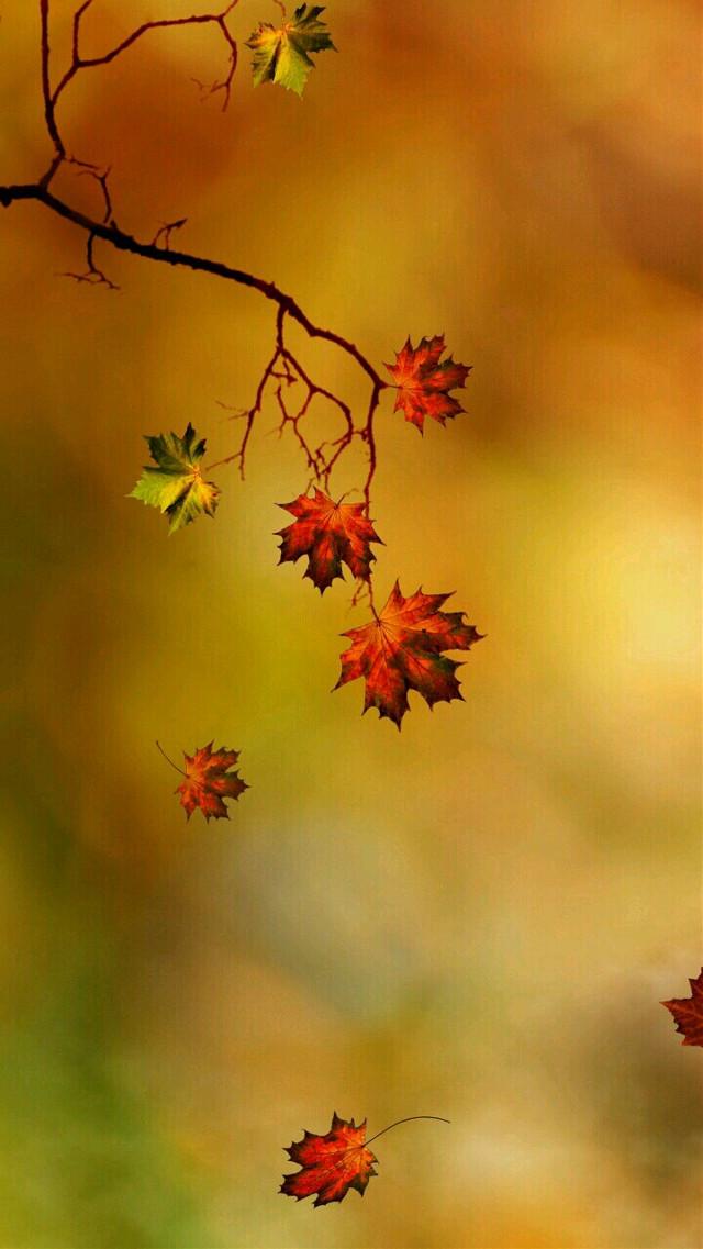 #wallpaper #autumn #fall