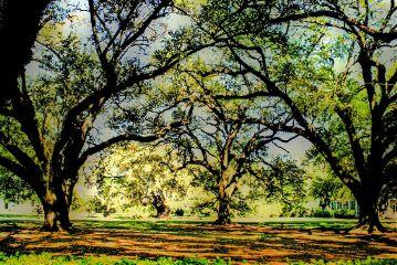 dpcsunshine photography travel nature