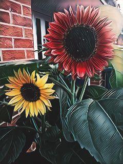 magiceffectbadlands mygarden sunflowers colorful