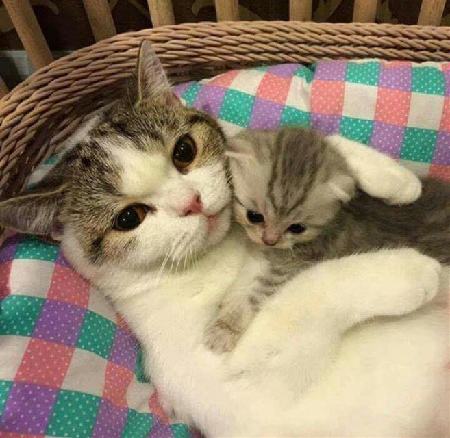 #FreeToEdit #remix #baby animal #cat