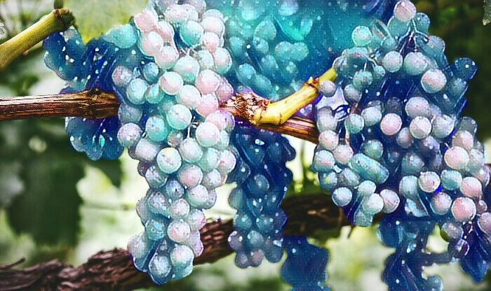 Another magic effect pic ❤❤❤#magiceffect #grapes