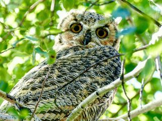 angeleyesimages landscape owl picoftheday nikon