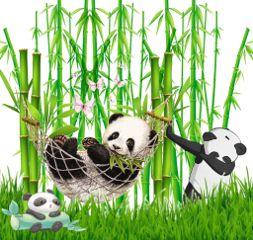 freetoedit pandas stickercollage bamboo myedit