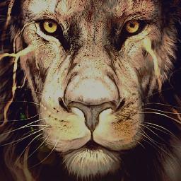 pets lion intense king freetoedit