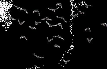 negro black birds png pajaros