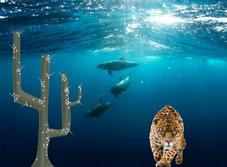 freetoedit dolphins lion cactus🌵 cactus
