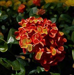 freetoedit photography remixed reeditedgallery fallflower