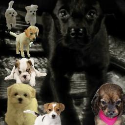 freetoeditpuppylove puppies broughtfriends lonelypuppy freetoedit