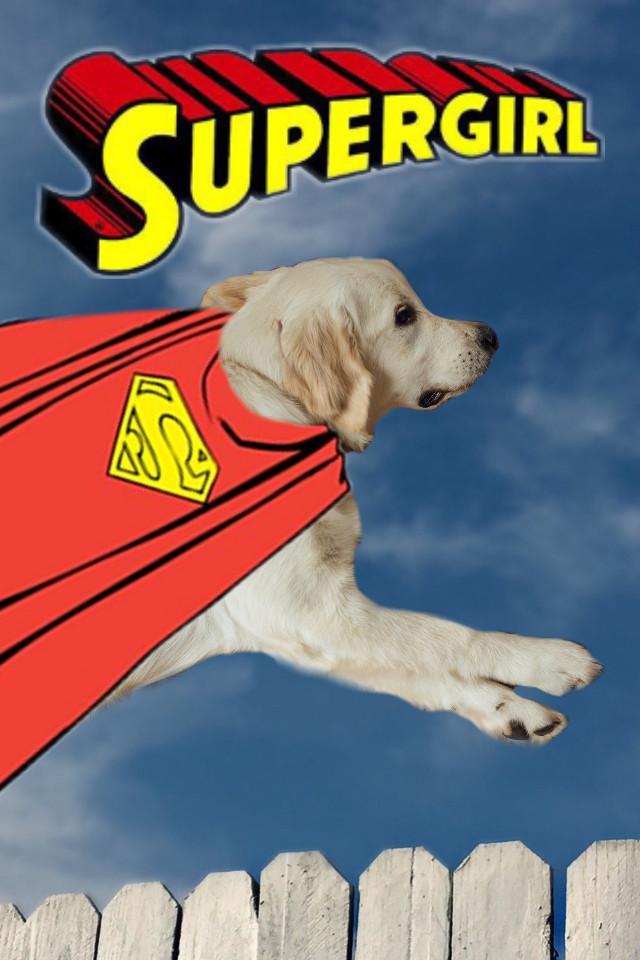 #freetoedit #dog #supergirl #superdog