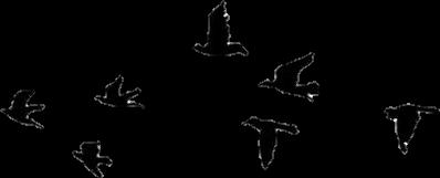 bird tumblr freetoedit