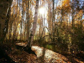 freetoedit walking trail fall