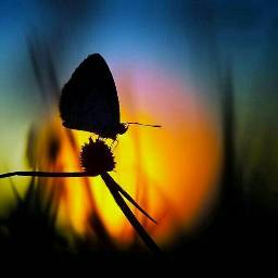 butterfly beautiful colourfulsky