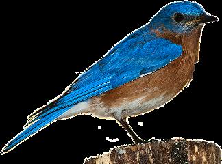 vogel freetoedit