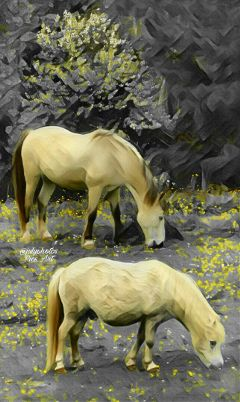 photography editedbyme edited nature horses