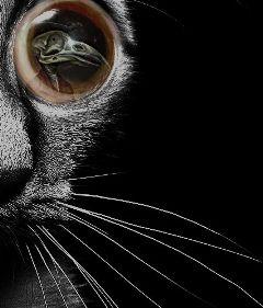 freetoedit myedit cat macro scaredycat