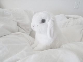 aesthetic white freetoedit bunny
