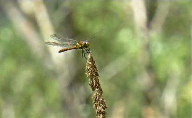 photography nature dragonfly bokeh naturephotography freetoedit
