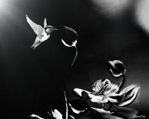 freetoedit blackandwhite flower bird nature