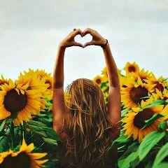 sunflowers🌻💛🌻 freetoedit sunflowers