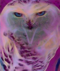 freetoedit myedit overlay spiritowl owl