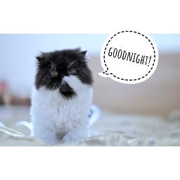 cat pets goodnight