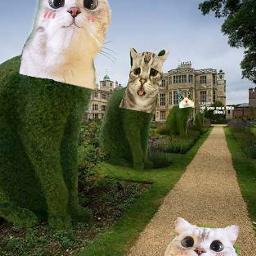 freetoedit catlover cats catstickers catsofpicsart