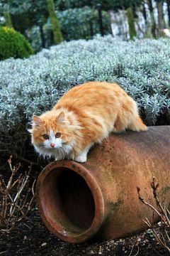 freetoedit cat catsofpicsart photography eyes