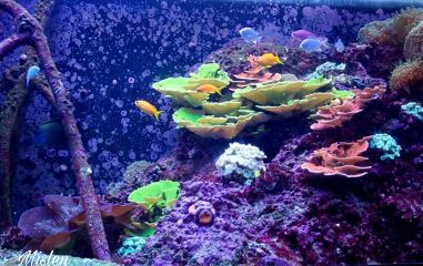 freetoedit underwater aquarium myphoto
