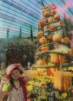 freetoedit pumpkins autumn harvest nature