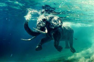 freetoedit beauty elephant africa love
