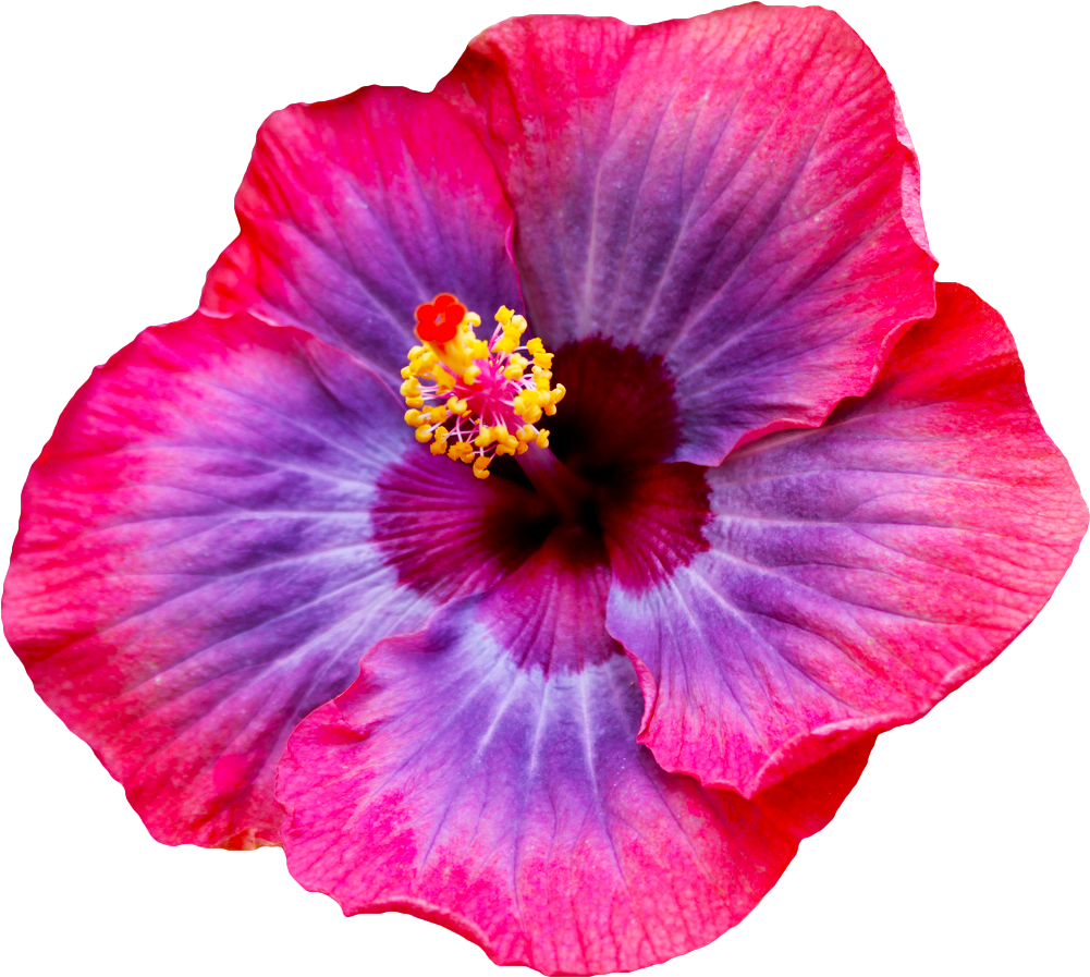 Hibiscus flower tumblr sticker by alissa denae izmirmasajfo