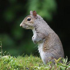 freetoedit nature animal squirrel waiting