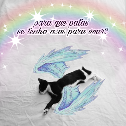 freetoedit fridacalo catslover cute fly