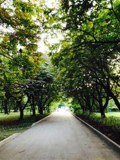 kuskovo les zelen