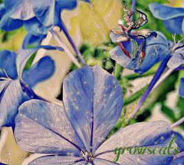 freetoedit flower surprise small garden