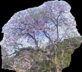 trees freetoedit