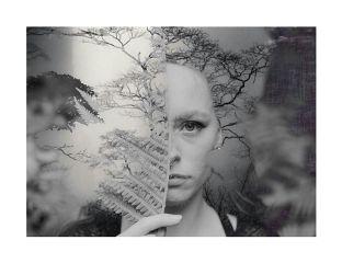 freetoedit blackandwhite photography forest overlay