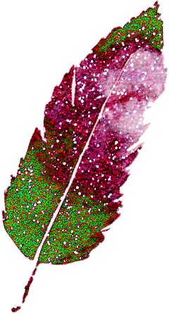 interesting art feather pink green