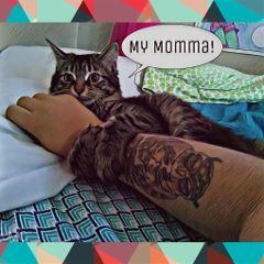 freetoedit jmc mymomma tallulah owl