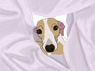 freetoedit dog hideaandseek