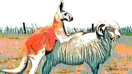 what australia kangaroo merinoram psprobpluspsplab freetoedit