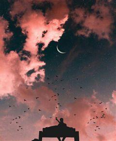alone sunset. sit man bird