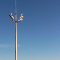 dpcwingedthings sreetlamppost seagulls sunnylight seaview