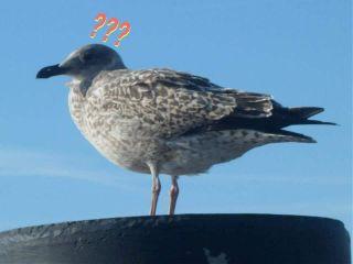 freetoedit möwe bird questionmarkstickerremix m