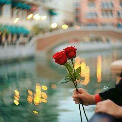 freetoedit flower flowers romantic gift