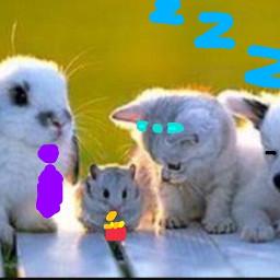 freetoedit animalgirl rabbit hamster cat